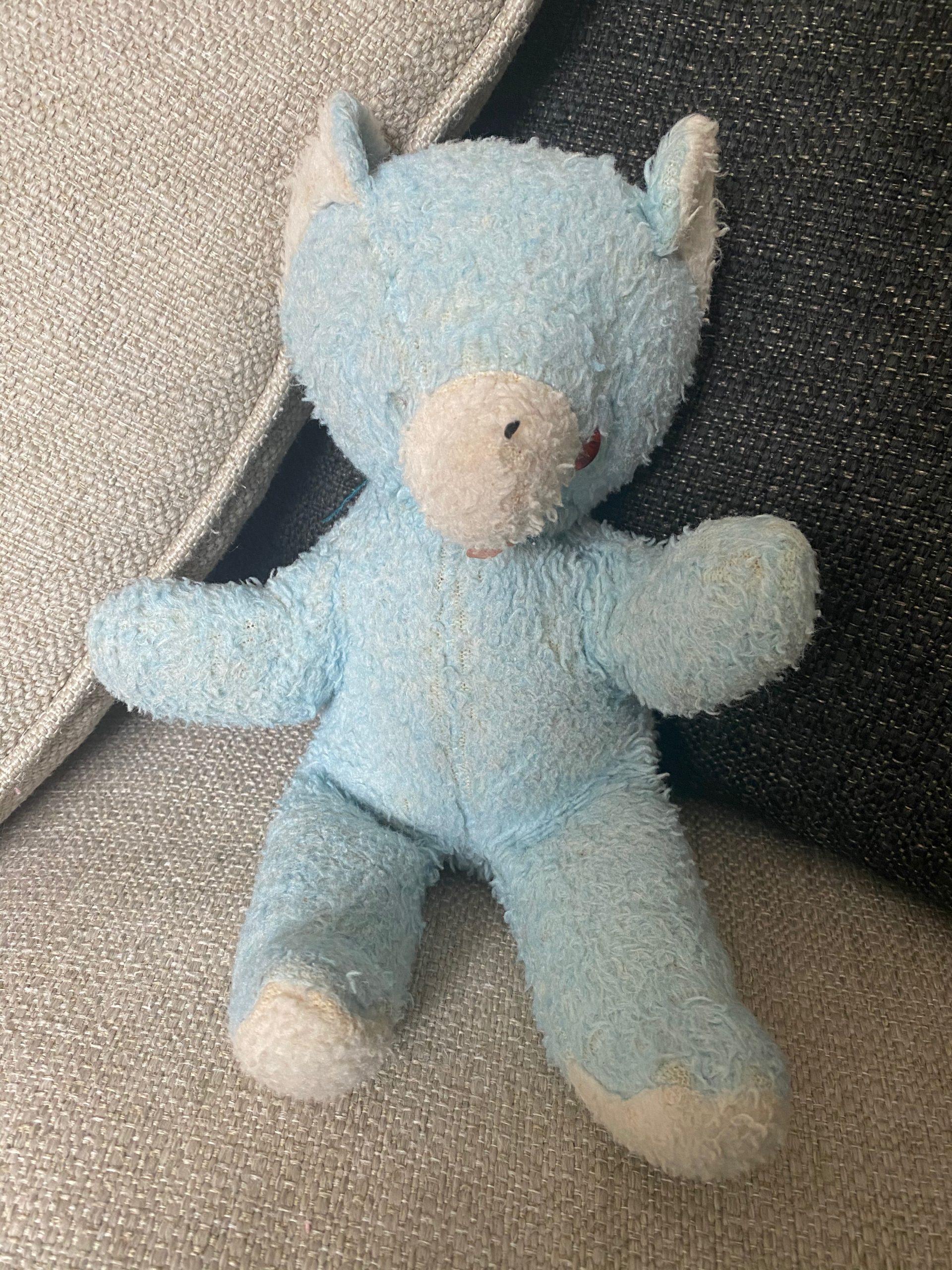 Blue the bear