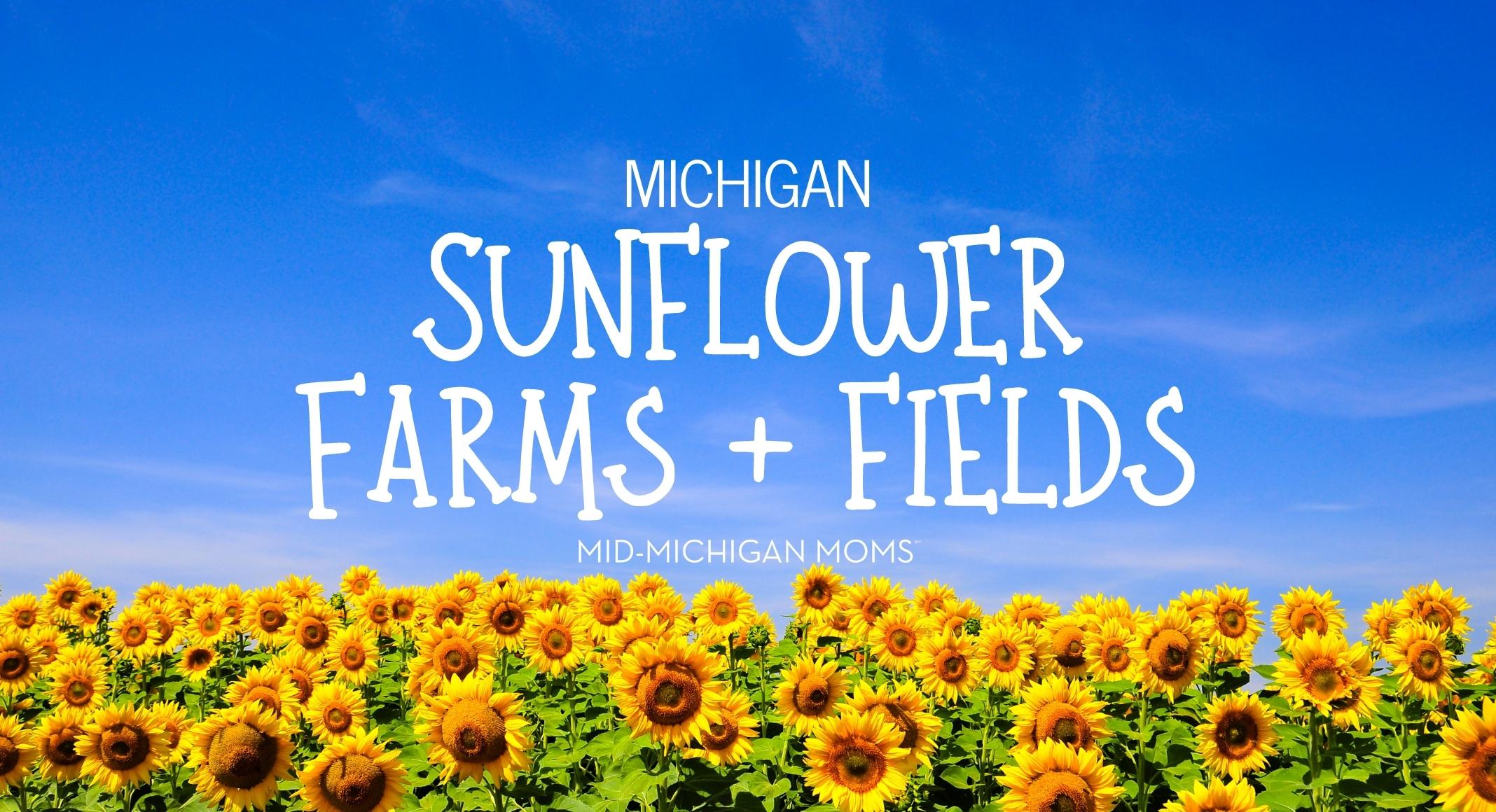 michigan sunflowers