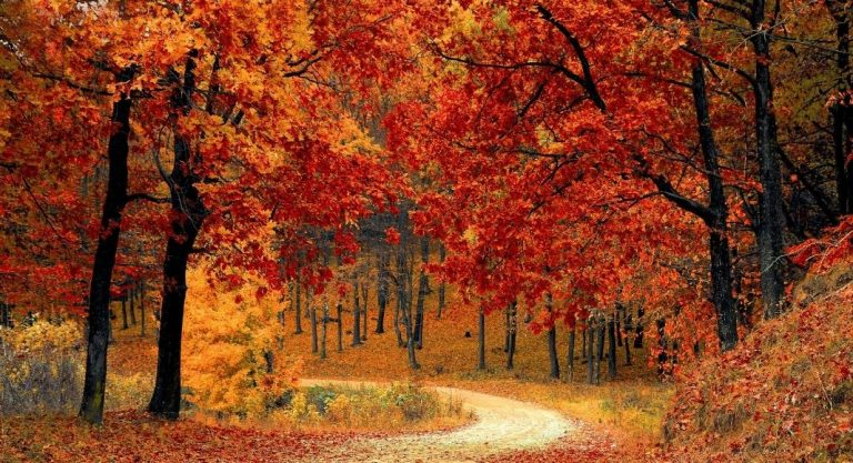Ten Must-Haves for a Michigan Fall Color Tour